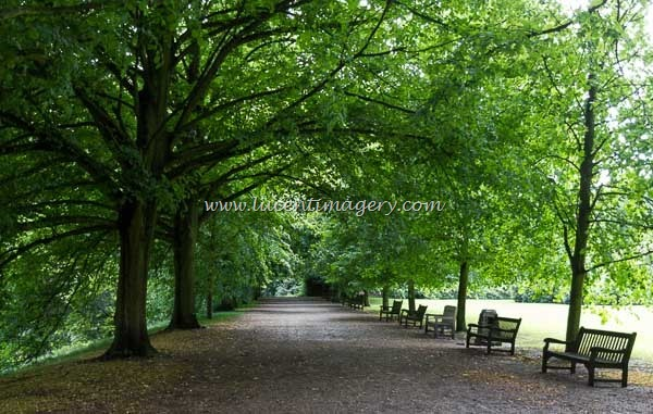 LDNgreen-copyright-www.lucentimagery.com-3