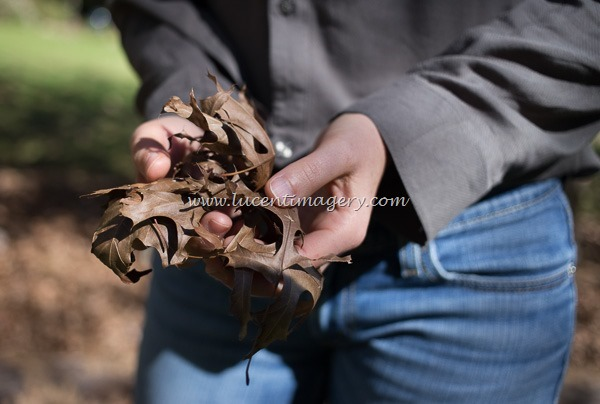 leaves-copyright-www.lucentimagery.com-1
