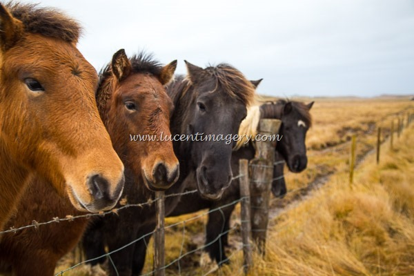 Iceland3a-copyright-www.lucentimagery.com-14