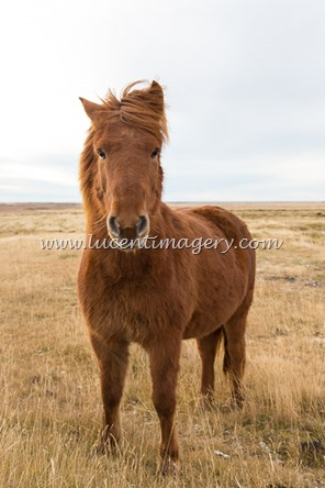 Iceland6-copyright-www.lucentimagery.com-4
