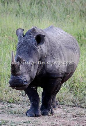 SA-safari-copyright-www.lucentimagery.com-1