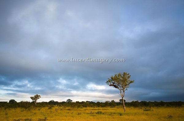 SA-safari-copyright-www.lucentimagery.com-4